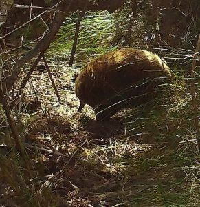 Echidna on a sunny afternoon